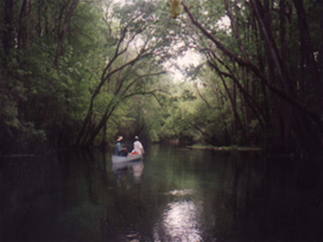 Canoers on a scenic river
